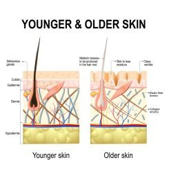 younger older skin collagen